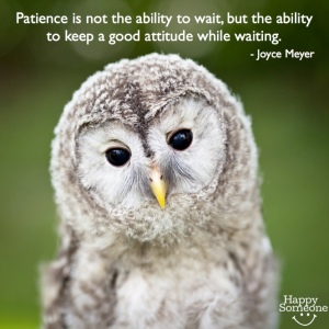 Patience owl