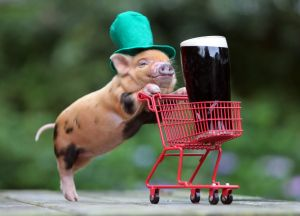 pig with Guinness