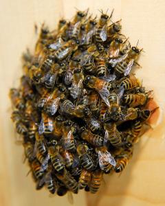 cluster_bee