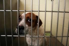 Guilt or Fear Shelter Dog